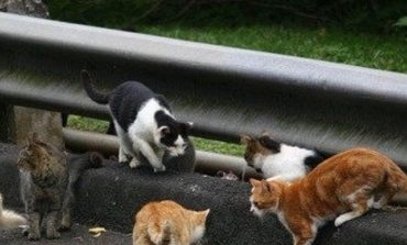 Groups Aims to Tame Feral Cat Problem