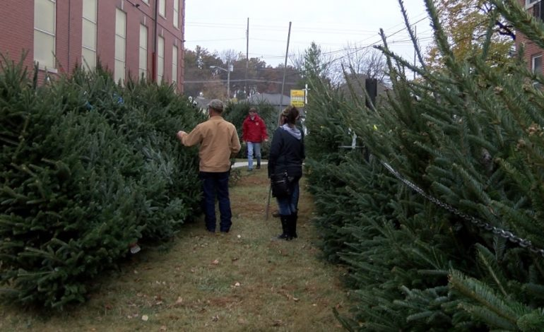 boy scout troop 399 is selling christmas trees - Boy Scout Christmas Trees