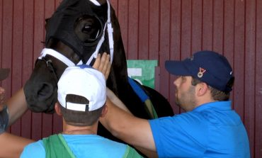 Top Trainer Brad Cox Looks for More Success at Ellis Meet