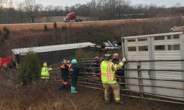 Cattle Rounded Up After Semi Truck Flips In Warrick County