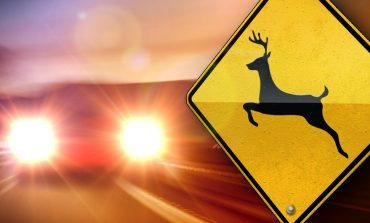 Kentucky Transportation Cabinet Warns of Deer-Crossing this Weekend