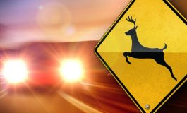 Watch Out! Flooding Causes Deer Commotion
