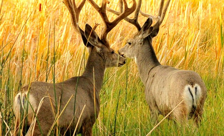 Deer Hunters in Indiana Can No Longer Use Rifles on Public Land