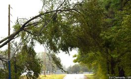 Tree Cutting Services in Henderson Accused of Price Gouging