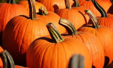 Free Pumpkins at Evansville Farmers Market