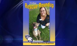 Dog Abandoned At Evansville Home Looking For Forever Home