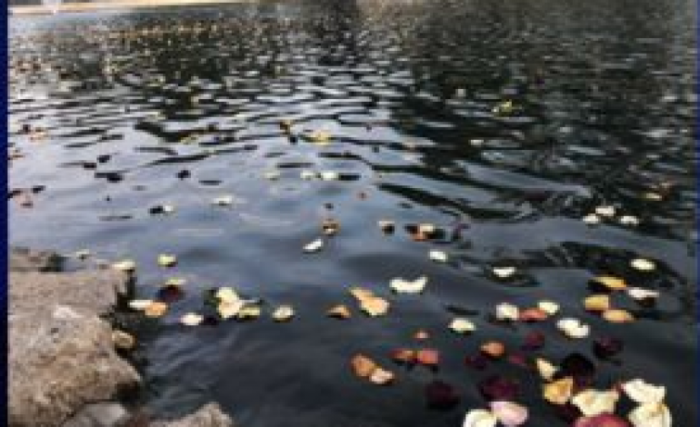 Flowers on the Lake
