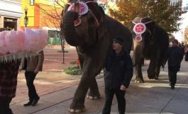 Hadi Shrine Circus Elephants Parade Around Downtown Evansville