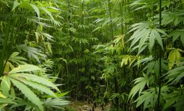 KY Farmers Could Start Using Hemp As A Crop