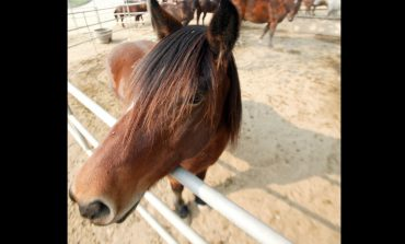 Volunteers Needed For Freedom Reins Therapeutic Riding Center