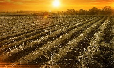 Indiana Farmland Goes Up in Value