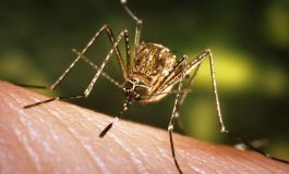 Health Department to Control Mosquito Population in Evansville