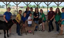 Meeting the Animals at the Henderson County Fair