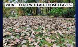 Inside The Community: Larry Caplan Gives Tips on Leaf Disposal