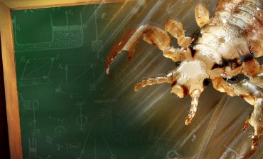 High Number Of Head Lice Cases Reported In Hopkins County Schools