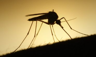 Researchers Developing Device That Detects Mosquito-Borne Diseases