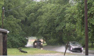 Business Accepts Bid to Remove Newburgh Tree Canopy