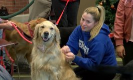 Therapy Dogs Help Students De-stress During Finals Week
