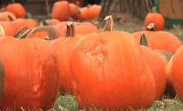 Inside The Community: Larry Caplan Talks Pumpkins