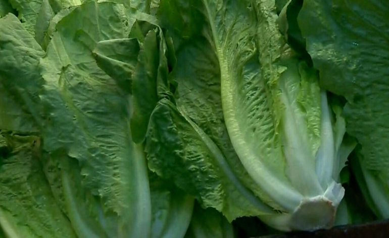 CDC Issues E Coli Warning For Romaine Lettuce