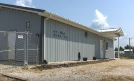 Animal Shelter will Not Face Charges for Abuse Allegations