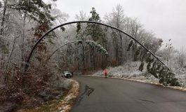 Winter Storm Brings Down Trees in Tell City Ranger District