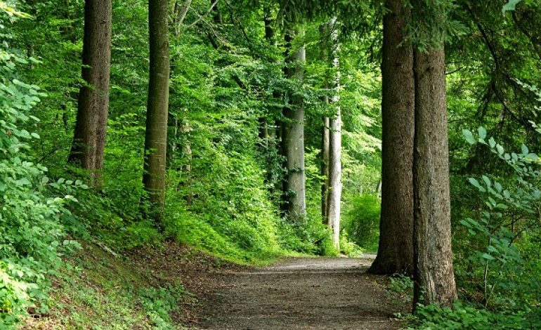 Yellowwood State Forest Property Sold to Hamilton Logging