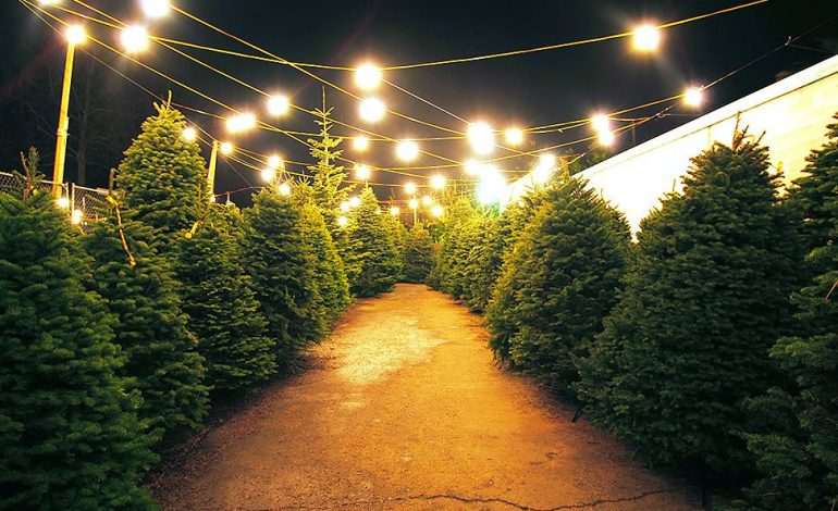 Troop 399 Christmas Tree Lot Open For Business - 44News | Evansville ...
