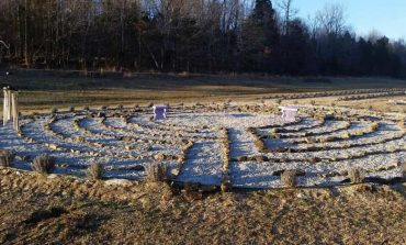 In the Community: Big Roots Lavender Farm