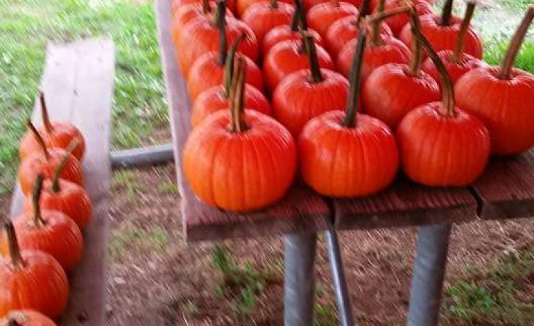 When And Where To Get Free Pumpkins In Downtown, Evansville