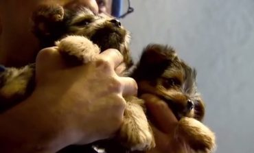 Hoosier Family Selling Puppies Targeted by Scammers