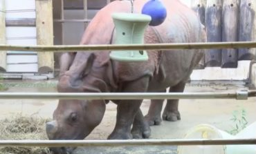 Rupert the Rhino Settles into New Home at Mesker Park Zoo
