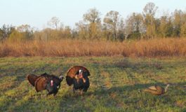 Turkey Quota Hunt Applications Available February 1st
